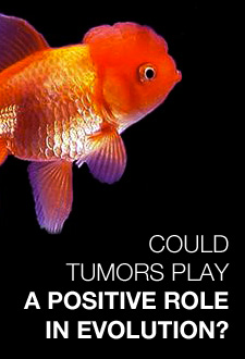 Headline: Could tumors play a positive role in evolution?